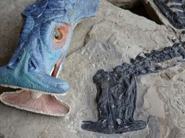 Modelo feito por cientistas mostra como seria a cabeça do animal (Foto: IVPP/ BBC)