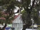 Conselheiro do TCE autoriza religamento de pardais em Maceió