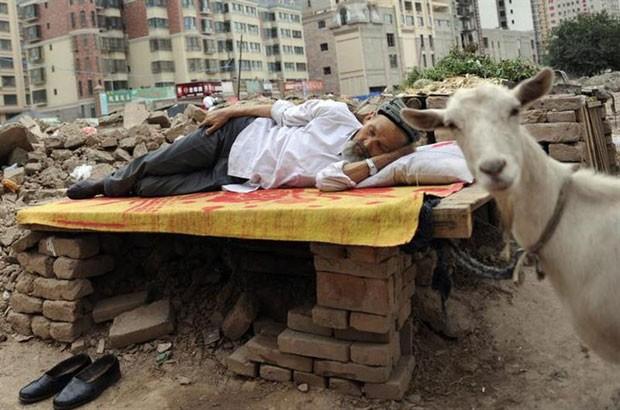 Homem deixou ovelha de 'guarda' enquanto tirava soneca na China (Foto: Stringer/Reuters)
