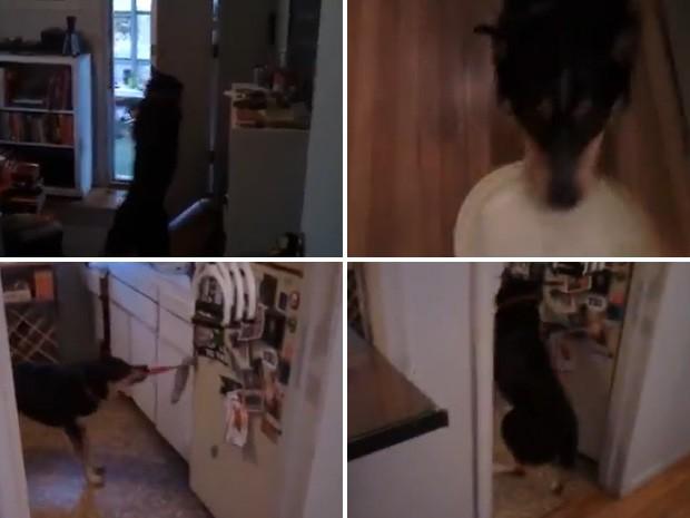 Cachorro fecha porta de casa, traz seu brinquedo e até abre a geladeira sob comando do dono (Foto: Reprodução)
