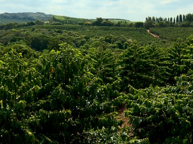 Produtores de café buscam melhorias na produção para expandir as vendas ao exterior (Foto: Reprodução EPTV)