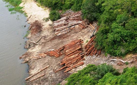 Toras de madeira ilegal apreendidas pelo Ibama na Amazônia (Foto: Tiago Jara/Ibama)