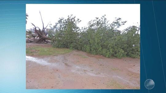 Chuva e ventos fortes derrubam árvores, muro e teto de loja na Bahia
