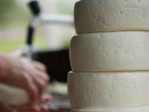 Congresso reúne interessados na produção de leite e queijo minas (Foto: Assessoria de Imprensa)