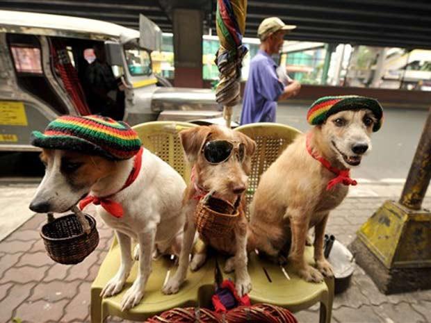 Usando chapéu e óculos, cães são utilizados pelos proprietários para pedir esmola em Manila, nas Filipinas, em 2010 (Foto: Noel Celis/AFP)