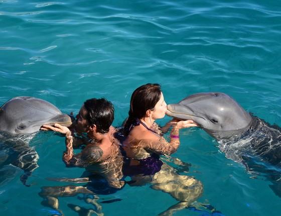 Ivete Sangalo e Daniel Cady nadam com golfinhos em Curaçao (Foto: Arquivo Pessoal)