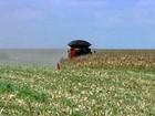 Agricultores apostam no consórcio do milho com braquiária em Goiás