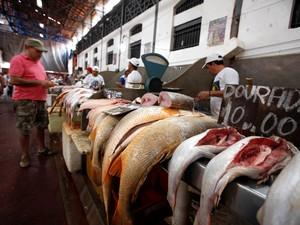 Adepará intensifica fiscalização de pescado nas vias de saída do Pará  (Foto: Sidney Oliveira/Agência Pará)