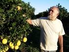 Agricultores de SP reclamam do preço recebido pela caixa da laranja