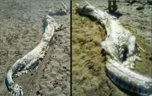 Carcaça de criatura marinha estranha foi encontrada no dia 15 de agosto em uma praia de Almería (Foto: Reprodução/YouTube/Manguta100)