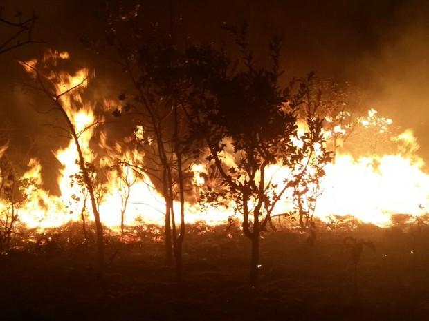 Fogo destruiu uma área às margens do Rio Ribeirão do Boi (Foto: Corpo de Bombeiros Voluntários/Divulgação)