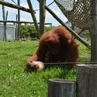 Animais de zoo ganham picolés de fruta  (Beto Carrero World/Divulgação)