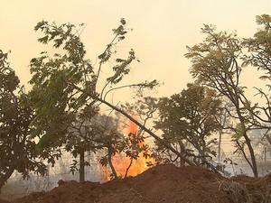 Fogo atingiu vegetação perto de Aeroporto de Confins (Foto: Reprodução/TV Globo)