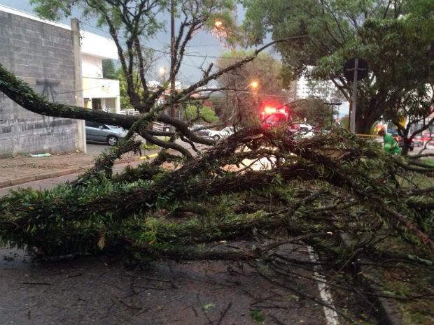 Queda interditou avenida em Jundiaí (Foto: Vinícius Whitehead/Arquivo pessoal)