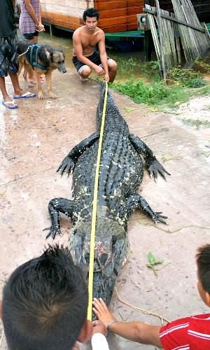 Pescadores mediram e comprovaram os 4,3 metros do animal (Foto: José Souza/TV Amazonas)
