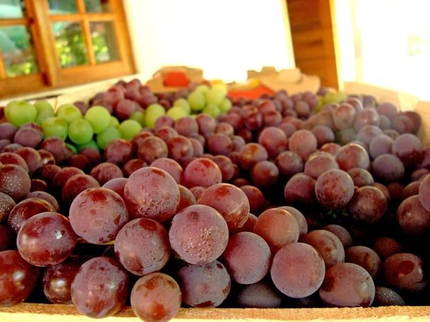 Frutas colhidas no sítio Cose della vita em Louveira (SP) (Foto: Matheus Filippi/G1)