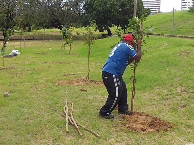 A Prefeitura de Fortaleza iniciou, na sexta-feira (19), o plantio de mais 50 mudas de árvores semi-adultas. (Foto: TV Verdes Mares/Reprodução)