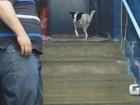 Cachorra de duas patas ganha novo lar e já está no interior de São Paulo