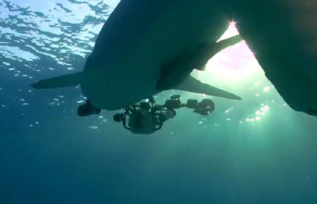 Vídeo que mostra o predador 'fugindo' com o equipamento valioso (Foto: Reprodução/Facebook/Guy Harvey)