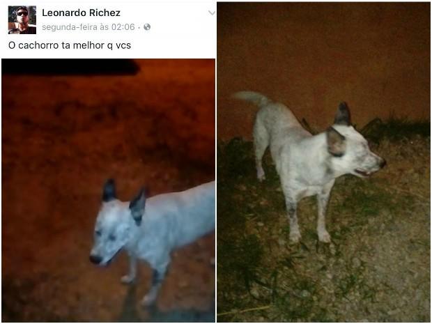 Após repercussão, Leonardo postou fotos na sua página para mostrar que o animal estava bem (Foto: Reprodução/Facebook)