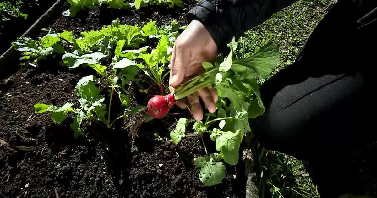 Globo Repórter sexta-feira 29/07/2016 – Programa mostra brasileiros que cultivam a própria comida