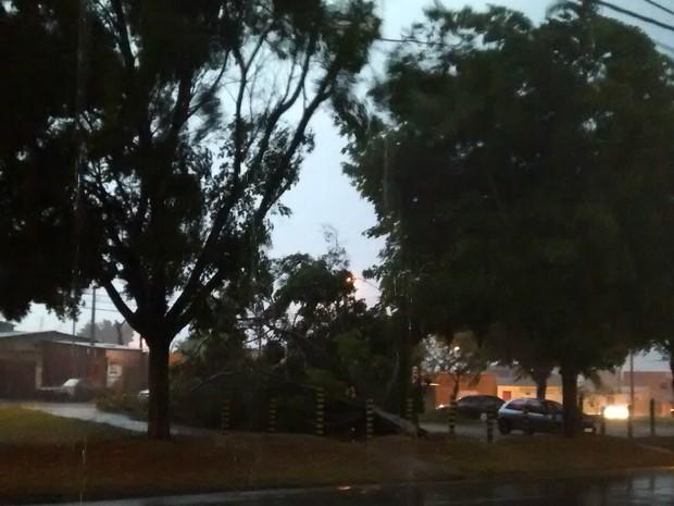 Temporal derrubou árvore no Parque Vitória Régia, em Sorocaba (Foto: Gislaine/TEM Você)