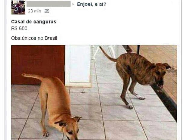 Falso anúncio de venda de cães do DF como cangurus (Foto: Facebook/Reprodução)