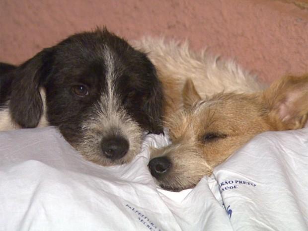 Cães dormiam sobre corpo de morador de rua encontrado morto em Ribeirão Preto (Foto: César Tadeu/EPTV)
