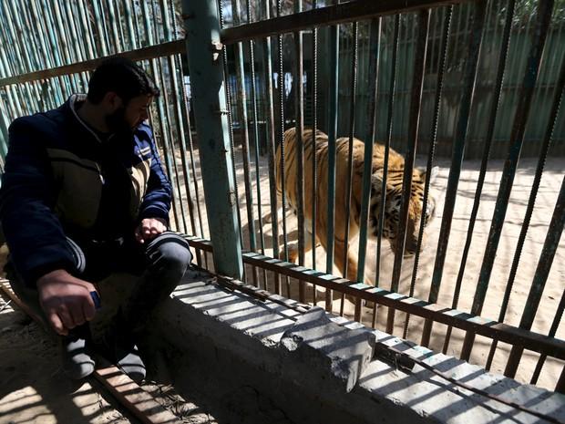 Tigre em zoológico na Faixa de Gaza é um dos animais que o dono, o palestino Mohammad Oweida, não consegue mais alimentar (Foto: Ibraheem Abu Mustafa/Reuters)