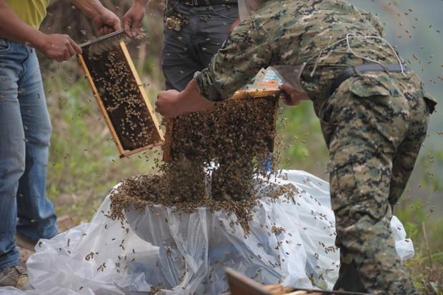 Insetos foram colocados próximos a apicultor e atraídos para seu corpo (Foto: STR/AFP)