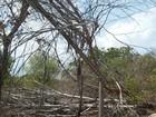 Zona rural de Araguaína fica sem energia após árvore derrubar poste