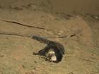 Macaco aparece morto no quintal de casa em Cariacica no ES