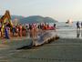 JT1: Duas baleias aparecem mortas em praias de Santos e Ilha Comprida
