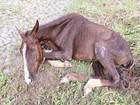 Égua é sacrificada em consequência de maus-tratos em Divinópolis, MG