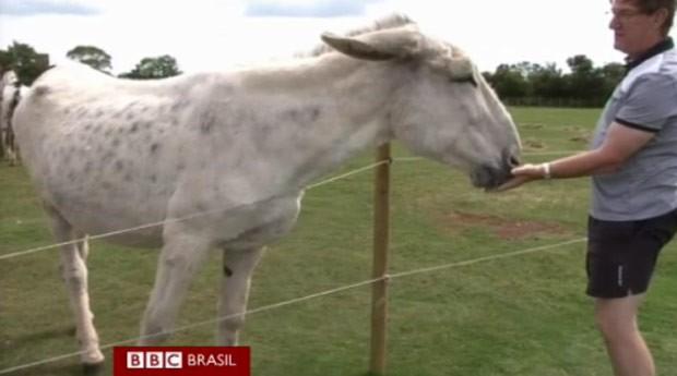 Refúgio da Inglaterra abriga jumenta 'gigante' (Foto: BBC)