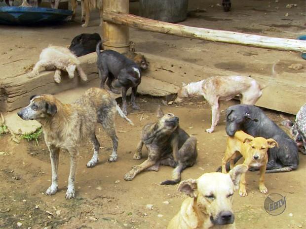 Cães vivem em situação precária em canil de ONG em Pocinhos do Rio Verde (Foto: Reprodução EPTV)