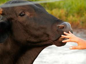 Manual tem o objetivo de melhorar a relação homem-animal. paragominas (Foto: Divulgação/ Jaime Souza)