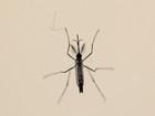 DF registra 15,1 mil casos de dengue e 12 mortes pelo vírus desde janeiro