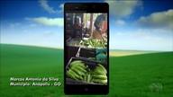 Telespectador mostra fazenda onde cultiva 324 mil pés de bananas
