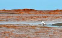 FOTOS: rejeitos fazem da praia de Regência um mar de lama (Fernando Madeira/ A Gazeta)