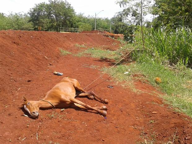 Égua estava amarrada pelo pescoço a bambu em terreno de Sertãozinho (Foto: Divulgação/Secretaria do Meio Ambiente de Sertãozinho')