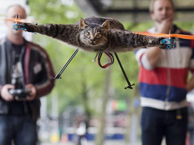 A obra 'Gato Helicóptero', do artista holandês Bert Jansen, ganhou esse nome não por acaso. O projeto que chamou atenção mundial ao ser exposto na feira de artes 'KunstRai' em Amsterdã, na Holanda, consegue voar de fato. (Foto: Toala Olivares/Reuters)