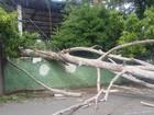 Árvore cai perto de escola e derruba poste em bairro de Campinas, SP