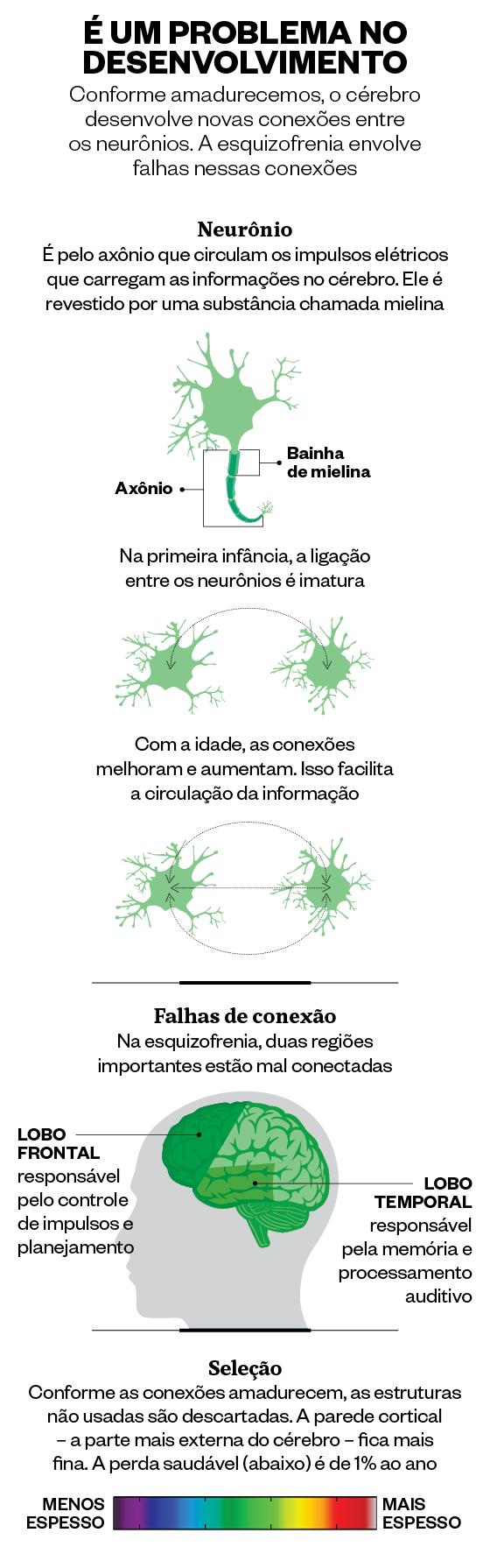 O desenvolvimento do cérebro (Foto: Giovana Tarakdjian/ÉPOCA)