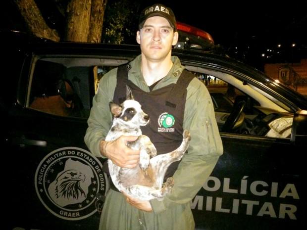 Equipe do Graer resgata cachorro em casa de Goiânia, Goiás (Foto: Divulgação/ PM)