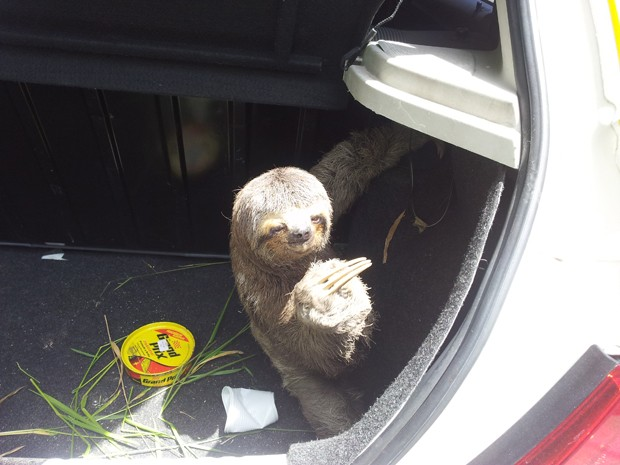 Animal foi resgatado e levado ao Hosto Municipal  (Fot Arquivo Pessoal / Airton Fernandes Lieuthier)