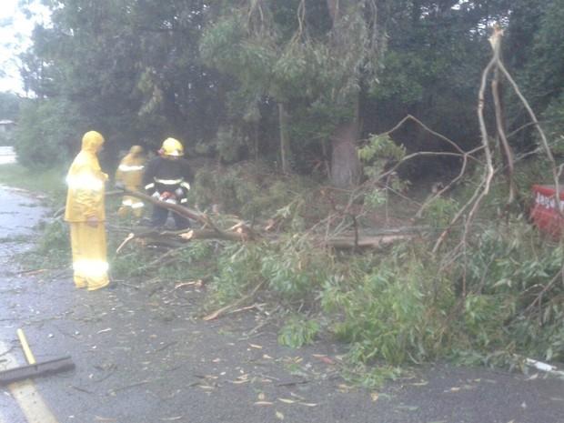 Árvore caiu sobre SC-442 em Jaguaruna (Foto: Bombeiros Voluntário de Jaguaruna/Divulgação)