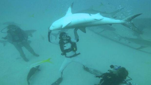 Mergulhador usa traje de aço para nçao sofrer ferimentos lidando com tubarões  (Foto: Riccardo Sturla Avogadri)