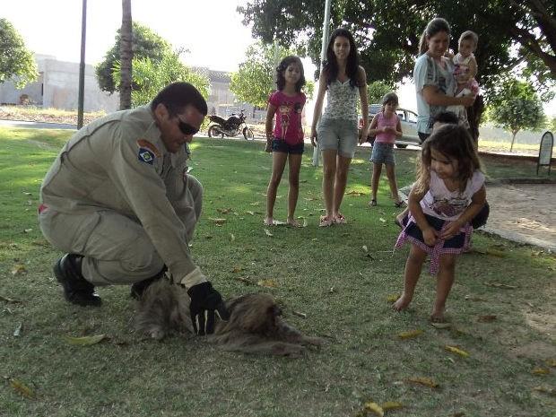 Captura do animal chamou a atenças das crianças da região (Foto: Divulgação / Bombeiros)