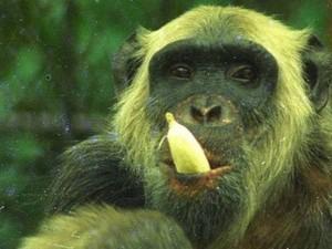 Macaco Tio - O Candidato do Povo (Foto: dilvulgao)